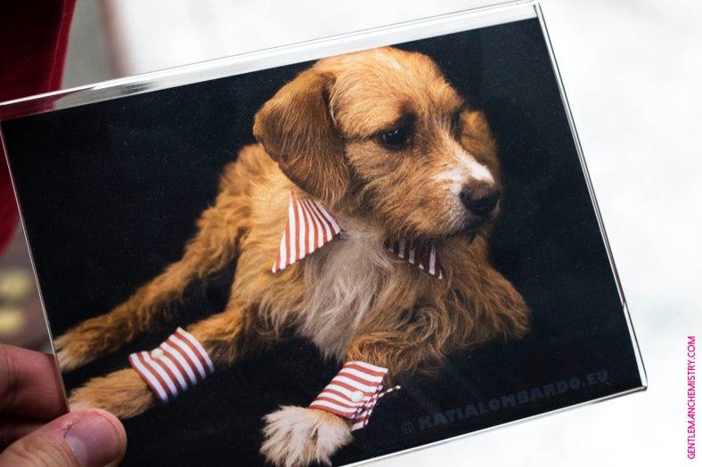 dog shirt copie
